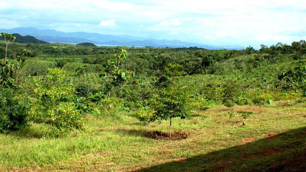 Panama Reforestation Project - Aspen