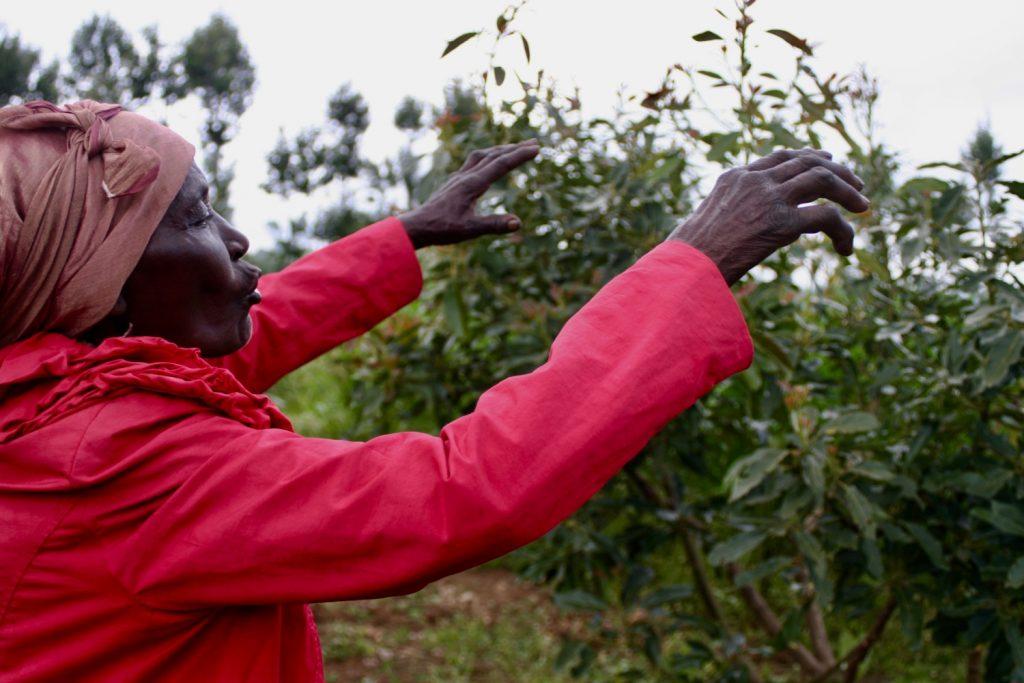 The Kenya Reforestation Project - Aspen